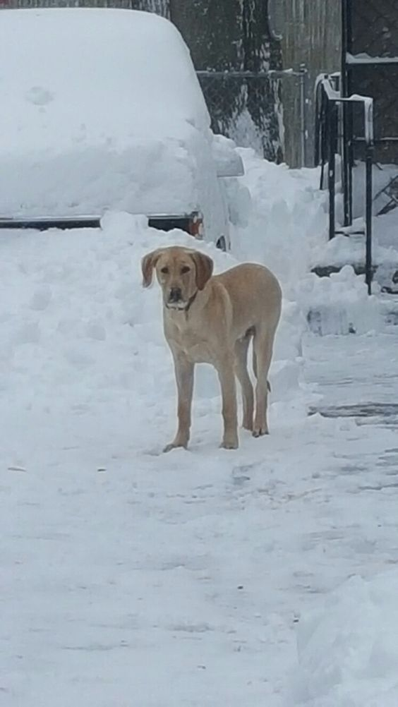5 month old Dozer playing in the snow...this is his first snowfall