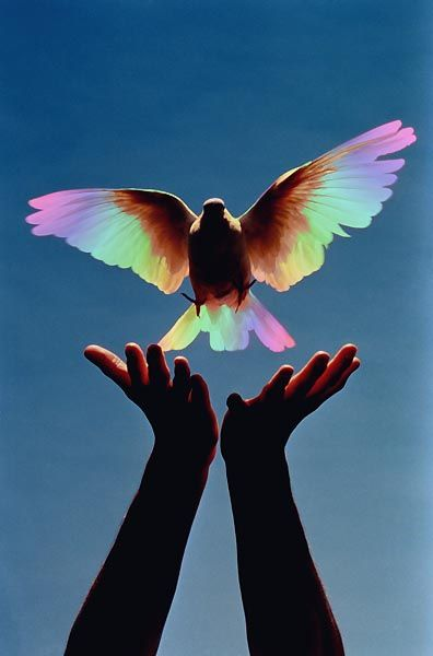 Soaring High In The Sky~ Beautiful Dove Representing The Divine Spirit, Love, And Free Will.