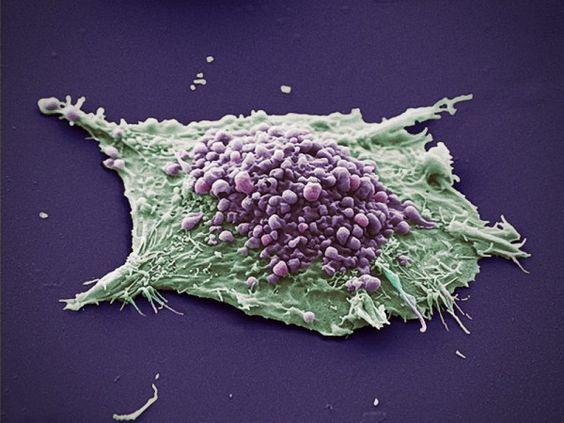 Resultado de imagem para células wallpaper