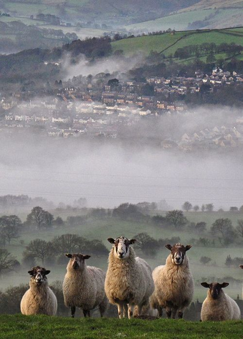 English sheep >>  This is a lovely view.