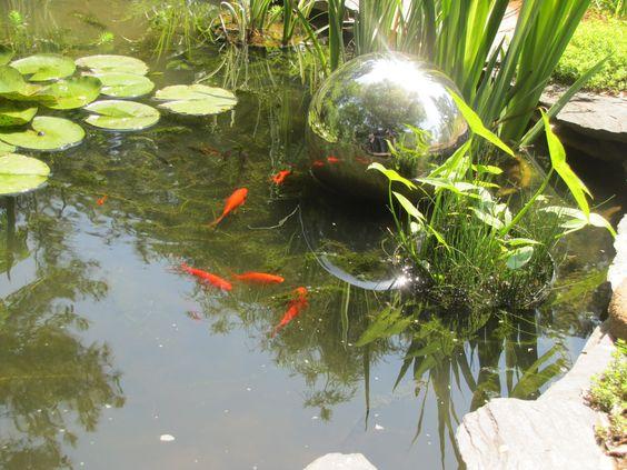 Goldfish pond garden pinterest goldfish goldfish for Outdoor goldfish pond