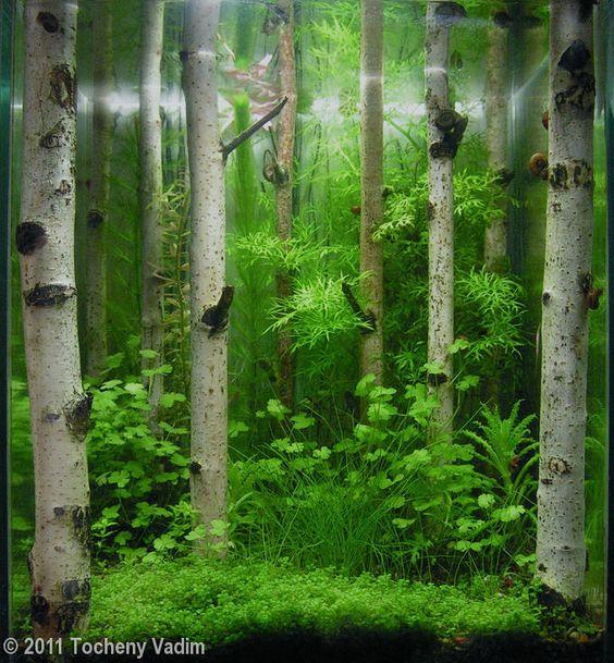 白木の森のようなアクアリウムアート