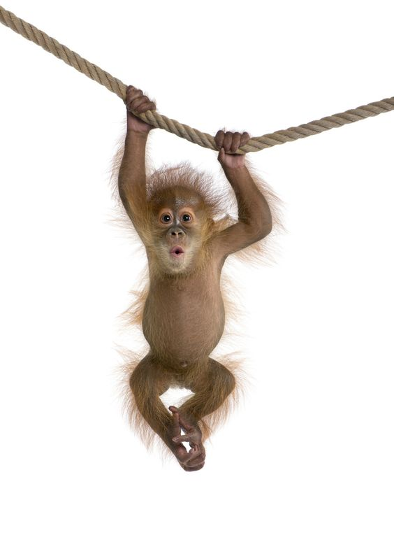 It S Almost Friday Not My Circus Monkey Pictures Baby Animals