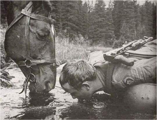 اشرب الماء حيث يشرب الحصان الحصان لن يشرب الماء العكر أبدا ضع سريرك حيث تنام القطة بشكل مريح تناول الفاكهة حيث تتوقف الدودة ابن Horses War Horse Photo