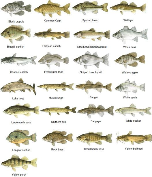 Freshwater fish google search camping fishing for All types of water