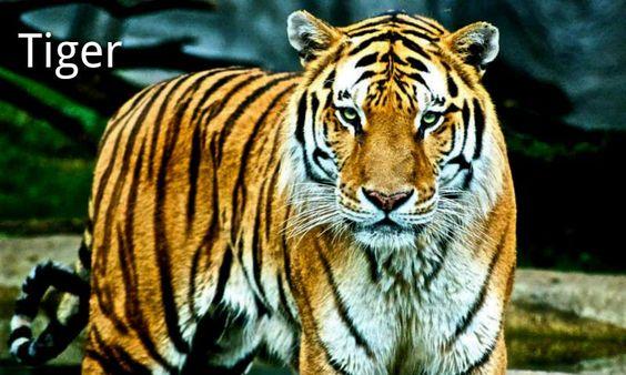Zoo Animals - Google Search