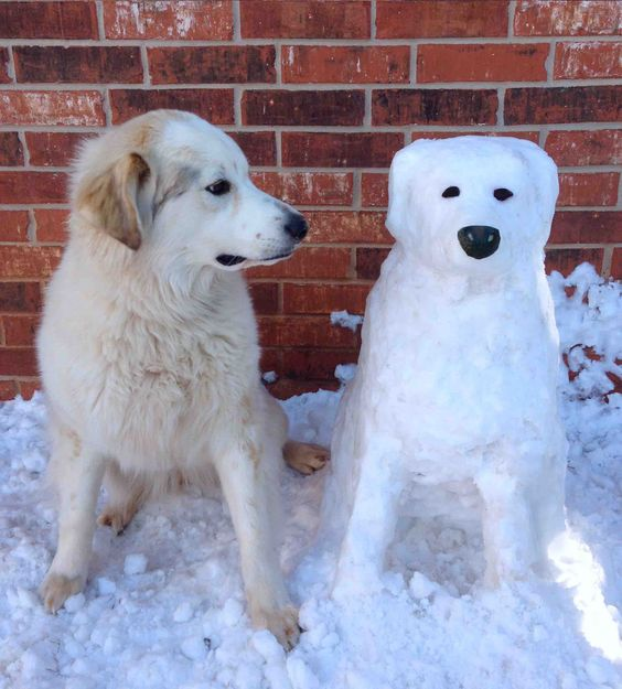 Dog sitting beside a dog snow sculpture #snowSculpture #snow #winter #sculpture #animals