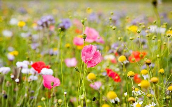 images-of-spring-flowers-and-wallpapers-12.jpg