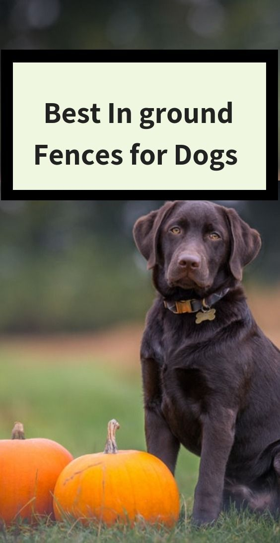 Best In Ground Fences For Dogs Boundary Training Dogs Keep Dog