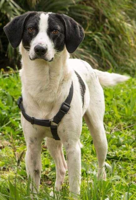 Regalo - adozione cane taglia media