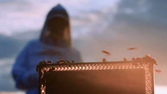 Bowers & Wilkins – Field Experiment No.1: Bees