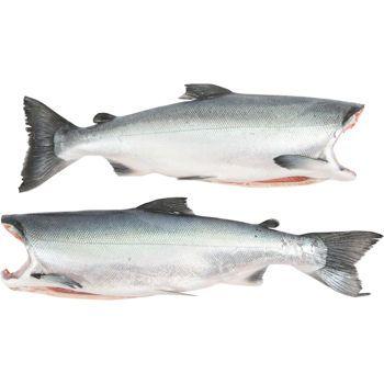 Pinterest the world s catalog of ideas for Alaska fish counts