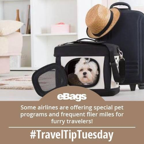 Pet travel just got more friendly! Check out these pet-friendly airlines!  #TravelTipTuesday