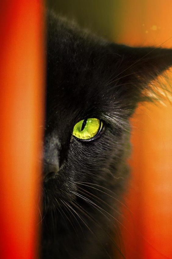 black cats are good luck.