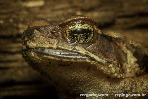 Animais - RepLago - Rep Lago - Acampamento - Natureza - Verde - mata - bicho