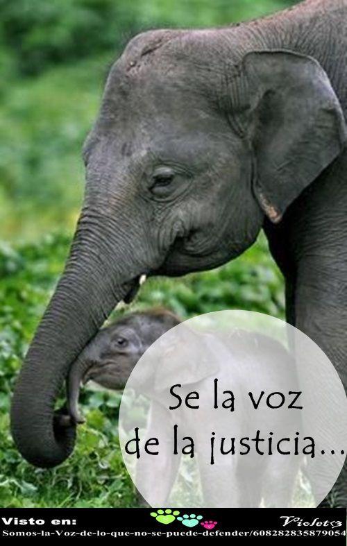 Se la voz de la justicia.  Visitanos: https://www.facebook.com/pages/Somos-la-Voz-de-lo-que-no-se-puede-defender/608282835879054