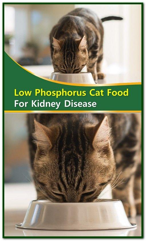 Low Phosphorus Cat Food For Kidney Disease With Images Kidney