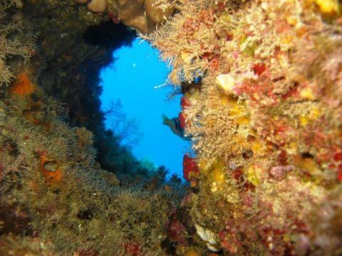 Parco Marino Scogli di Isca Amantea #Calabria - Fondale marino