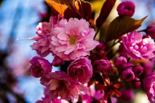 احلى بوكيه ورد احلى واجمل بوكيه ورد 2020 Zina Blog Flowers Bouquet Flowers Rose