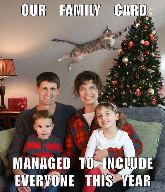 60 New Hot Funniest Cat Memes To Welcome 2020 Funny Christmas Pictures Funny Pictures Funny Animal Memes