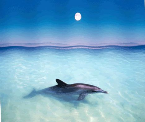 Glitter Dolphin | Dolphin Greetings » Page 2