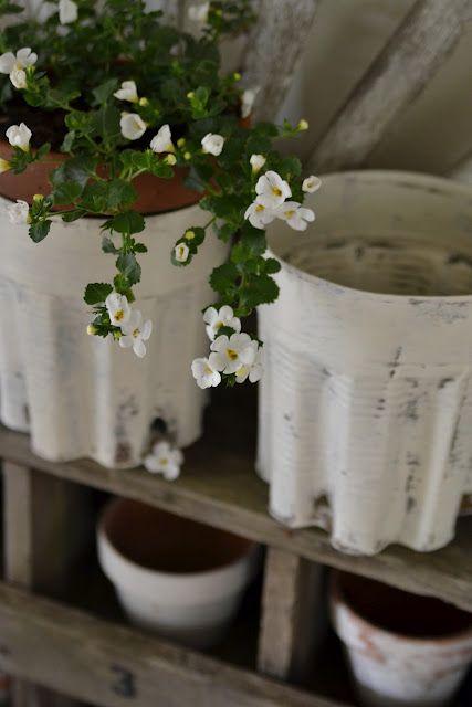 Bacopa: Outdoor Garden, Hardy Plants, Bakopa Flowers, Gardening Hardy