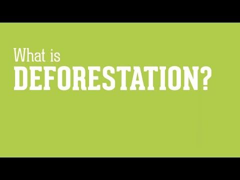 A short video to explain deforestation to children. With animations and statistics, this less than 2 minutes video shows how deforestation happens and how the U.S. is contributing to forest destruction. By recycling,  buying recyled products, and telling others, children can help protect the environment.