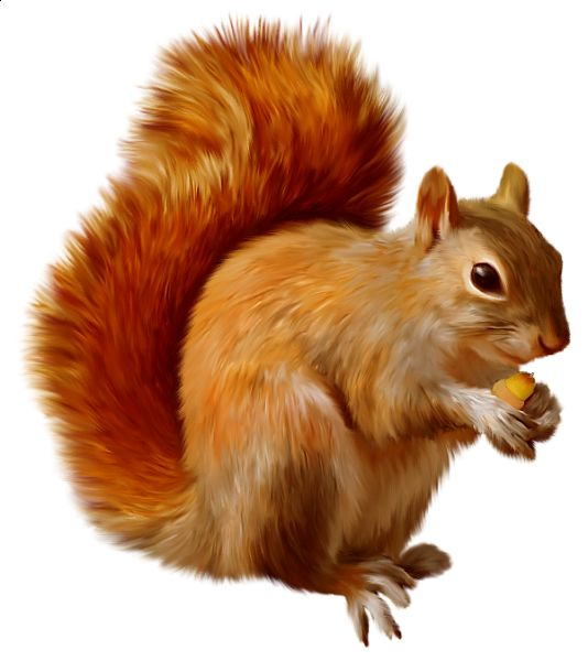 Red Squirrel Clip Art