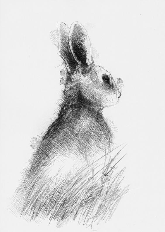 Artist Sean Briggs producing a sketch a day Rabbit  #art #drawing #http://etsy.me/1rARc0J #rabbit #sketch