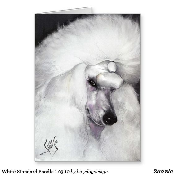 White Standard Poodle 1 23 10 Greeting Card