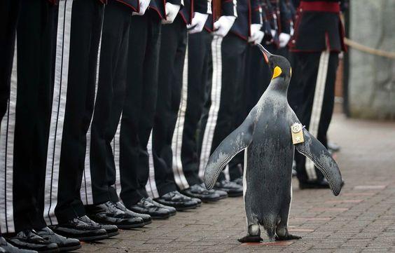 """ゆきまさかずよしさんのツイート: """"Guardian:エディンバラ動物園のペンギンの「ニルス・オーラヴ卿」 https://t.co/8AIFcdlUKt…"""