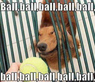 Ball ball ball lol
