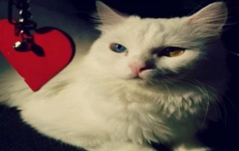 K Alwaleedi Shared A Video On Instagram Cat Cats Catlove Catslovers Love Liker Loveyou قط قطه محبي القطط تعايش معي Dog Dogs Dogslov In 2020 Cats Animals