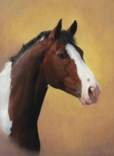 MIKE HAKEN'S HORSE PORTRAIT GALLERY