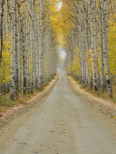 Aspen Alley Fall In Wyoming The Wide Open Spaces Of