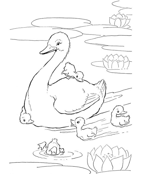 Farm animal coloring page | Ducks swimming in the farm pond ...