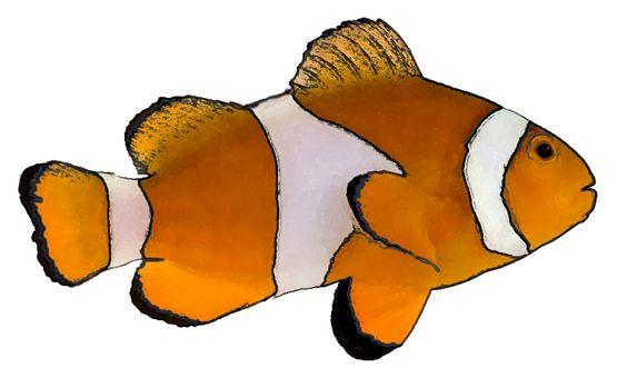 image for walleye fish clip art animal clip art free download rh pinterest com walleye clipart vector