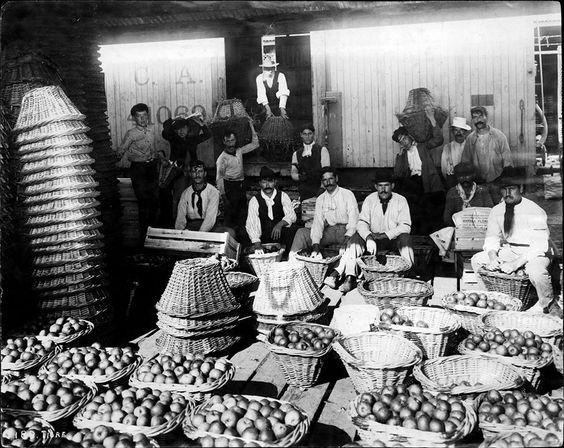 Buenos Aires. Mercado de frutos en Tigre, llenando los canastos, c. 1902. Documento fotográfico. Inventario 138454. Fotografía de Harry Grant Olds.