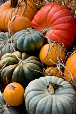 Thai-Spiced Pumpkin Soup | To Try | Pinterest | Pumpkin Soup, Farm ...