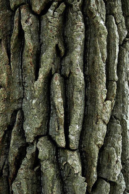 tree bark....I don't know why, but I like tree bark