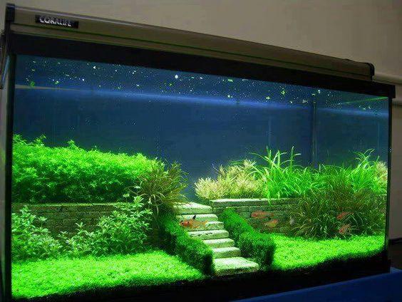 Aquascaping fairy terrarium and aquarium on pinterest for Aquarium einrichtungsideen