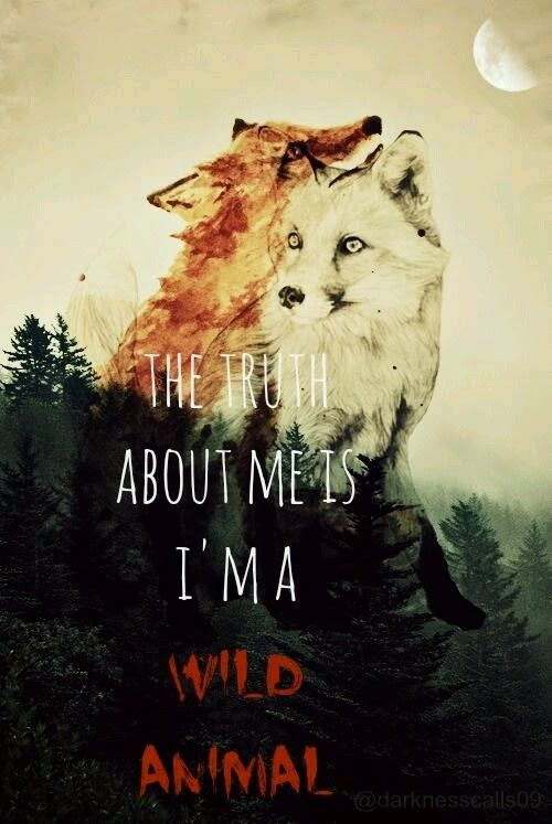 Pin By Astera Akashic Starseed Creat On Fox Art Prints Images Fox Quotes Animals Wild Animal Quotes