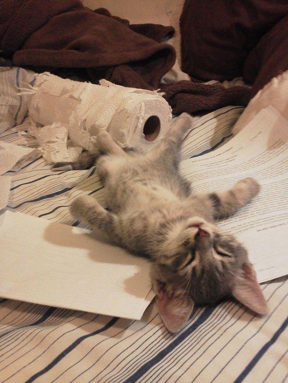 It's hard work shredding the paper roll. #sleeping #kitten