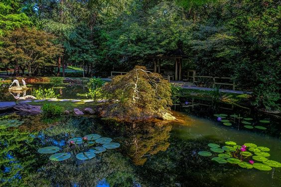 Join us on Saturday and Sunday, October 10 and 11th from 11 am to 5pm for our Waterlily Festival. Check out the winners for the Photography contest, enjoy French food and wine, catering by Madeline's Coast 2 Coast, mimes, face painting and artists creating original works in the Gardens. Live music both days!