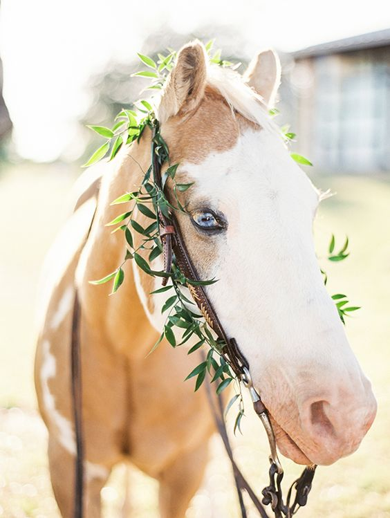 Blue Eyed Horse | Kristen Kilpatrick Photography | In the Golden Light of Summer Wedding
