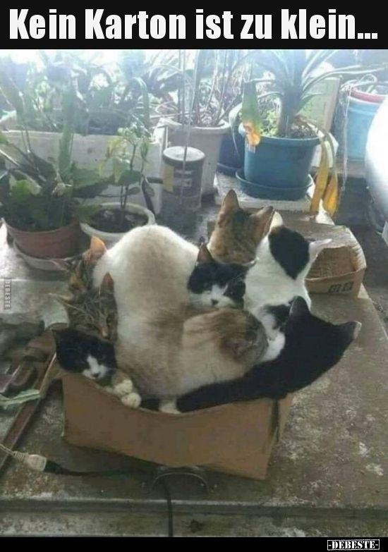 Kein Karton Ist Zu Klein Katze Lustig Katzen Memes Lustige