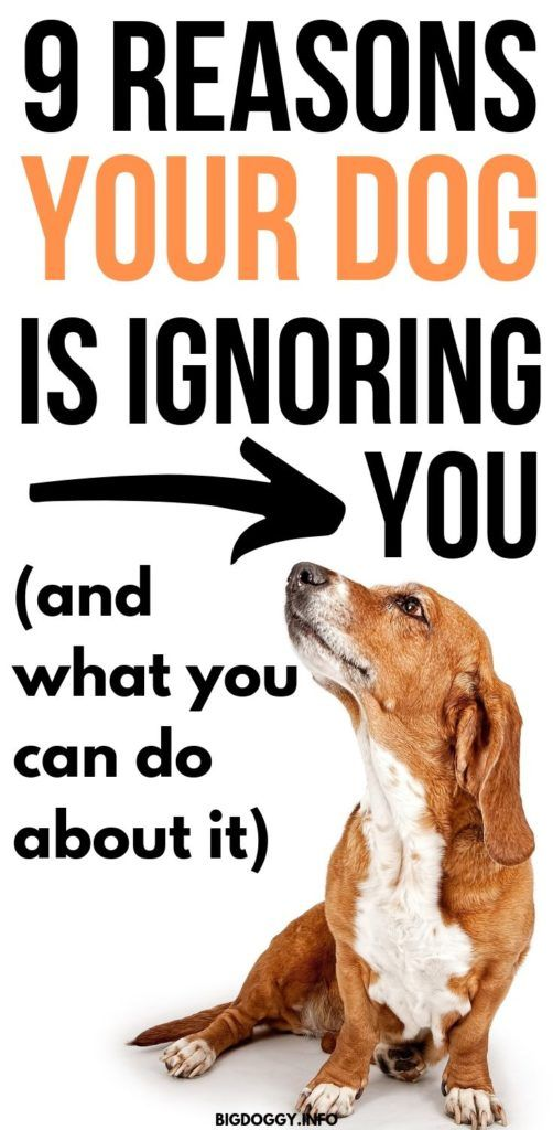 Is Your Dog Ignoring Every Command If So Try To Avoid Sounding