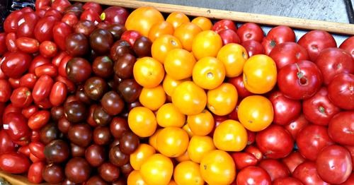 'Tis the season of heirloom tomatoes! Our friends at Terra Firma Farm explain the varieties and growing process of these beauties.