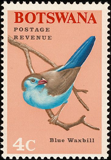 Blue Waxbill stamps - mainly images - gallery format