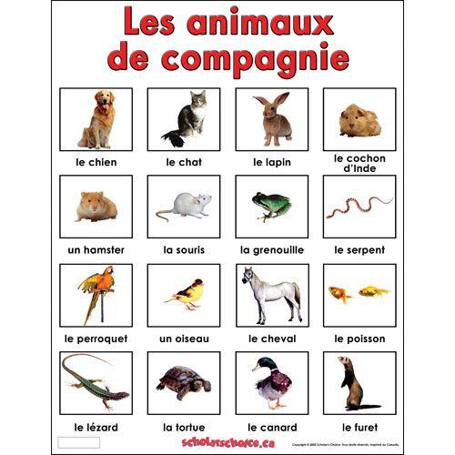 Resultado de imagen de les animaux de compagnie